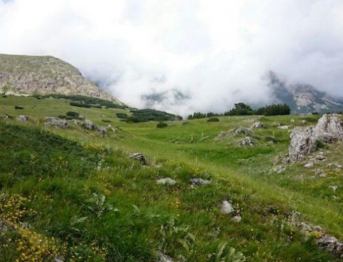 Eurasian Grasslands Conference