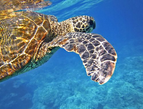 Faculty position – Hawai'i Institute of Marine Biology